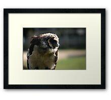 Feathery companion Framed Print