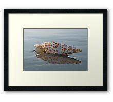 Seashell by the Seashore Framed Print