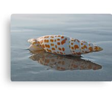 Seashell by the Seashore Canvas Print