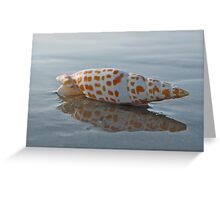 Seashell by the Seashore Greeting Card