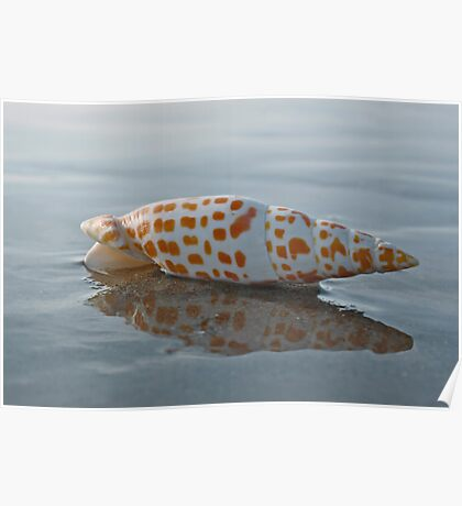 Seashell by the Seashore Poster