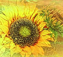 Sunshine Glory  by Selina Ryles