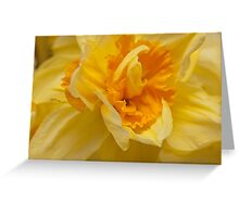 Daffodil close up Greeting Card