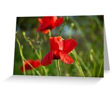 Red poppy flower Greeting Card