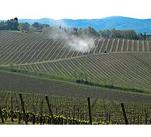 fields of grape plantings Photographic Print