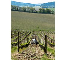 tractor between the grapevines Photographic Print