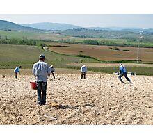 men planting vines Photographic Print