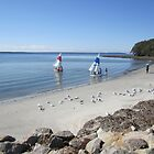 A Tranquil Morning (at Callala Bay) NSW by Lunaria