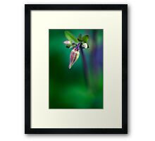 Chasing dragons through the garden Framed Print