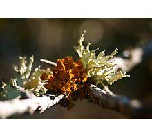 Lichen Delight Photographic Print