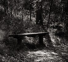 Bench by Christine  Wilson Photography