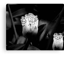 Orchid Light Canvas Print