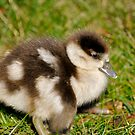 Spring Babies by Lisa Williams