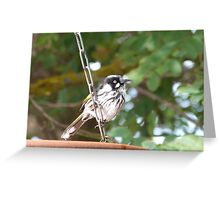 Juvenile New Holland Honeyeater loves the water too. Adelaide Hills.. Greeting Card