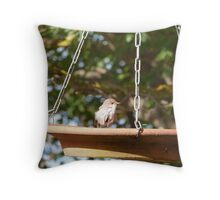 'I FEEL SO REFRESHED!' Tiny Superb Fairy Wren after bath.Adelaide Hills. Throw Pillow