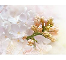 Spring Lilacs Photographic Print