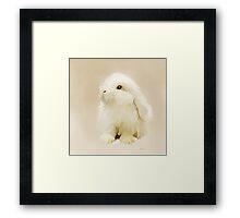 Young White Rabbit Framed Print