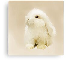 Young White Rabbit Canvas Print