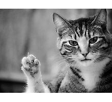 Bad Kitty - Double Take Photographic Print