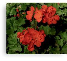 Geranium Flowers By Jonathan Green Canvas Print