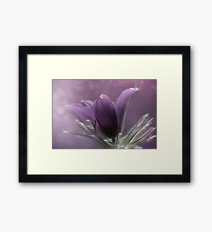 In the morning light... Framed Print