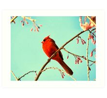 Cardinal & Cherry Blossoms Art Print