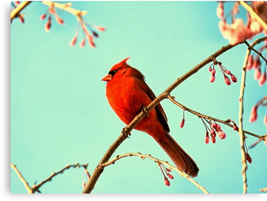 Cardinal & Cherry Blossoms by Sharon Woerner