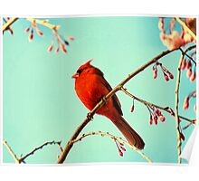 Cardinal & Cherry Blossoms Poster