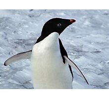 Adelie Penguin Portrait Photographic Print