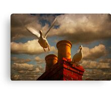White Ducks Canvas Print