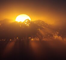 ~ Here Comes the Sun ~ by LeeoPhotography