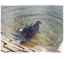 Pigeon washing Poster