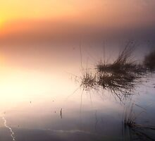 Silent morning by THHoang