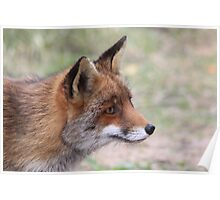 Red Fox 3347 Poster