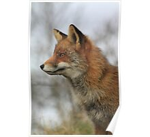Red Fox 3459 Poster