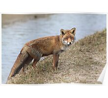 Red Fox 3496 Poster