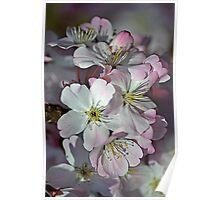 Pink Spring Blossom Poster