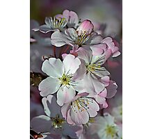 Pink Spring Blossom Photographic Print