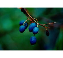 blueberry ash (Fraser Island) Photographic Print
