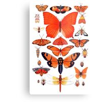 Orange Insect Collection Metal Print