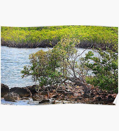 Biscayne Bay National Park Poster