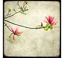 Branche de Magnolia Photographic Print