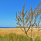 Tree on the Headland by OOSweet