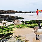 Canadian Geese at Trevone by OOSweet