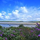 Overlooking the estuary from Padstow by OOSweet