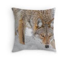 Weary Coyote Throw Pillow