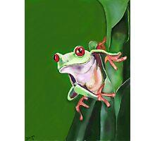 Tree frog Photographic Print