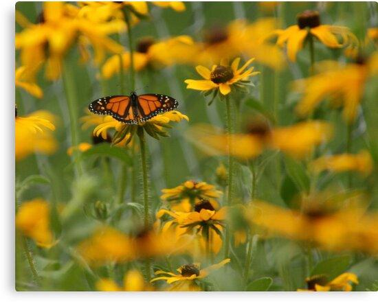 butterfly by ffuller