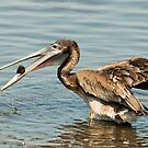 Pelican With Lunch by Joe Jennelle