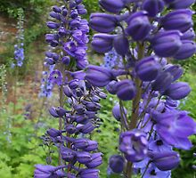 Delphiniums #2 in Harmony Garden by Babz Runcie
